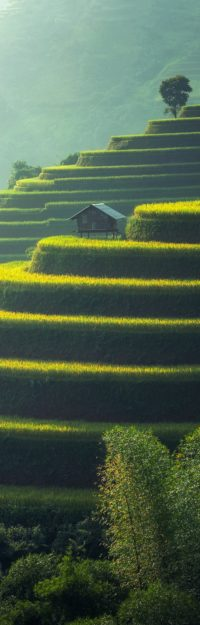 agricultural-agriculture-cropland-247599